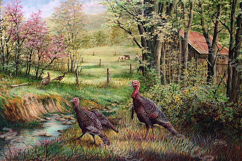 PRTGLP-422-Turkey at Jakes Run