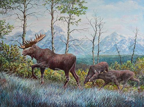 PRTGLP454-Moose At Tetons