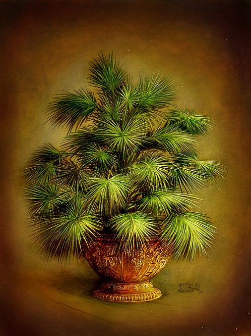 PRTOE710 Dark Palms in Pot- Clusters