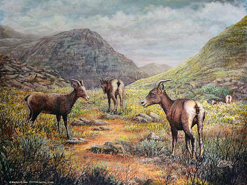 PNT769-Naches Goats