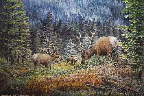 PRTGLP337-Five Elk at Rimrock