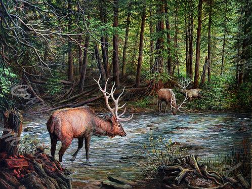 PRTGLP759-West Side Elk