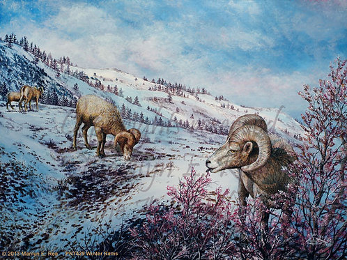 PNT429-Winter Rams