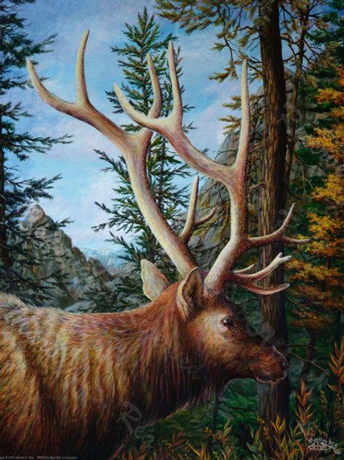 PRTGLP333-Bull Elk in Autumn