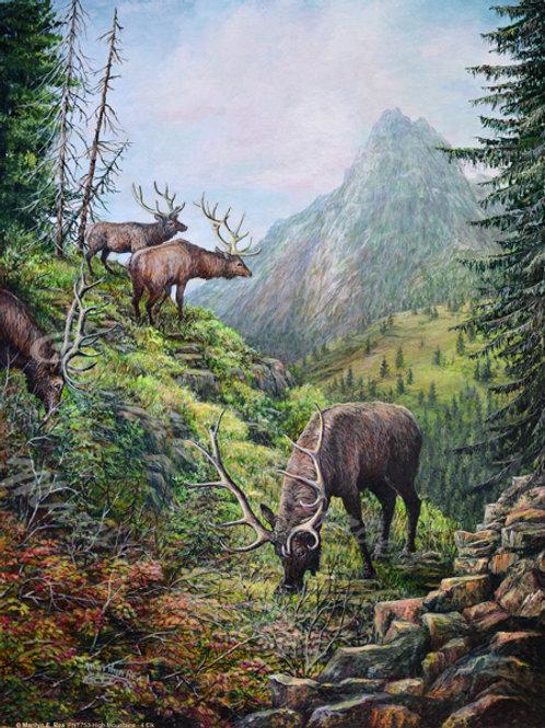PRTGLP753-Four Elk at North Cascades