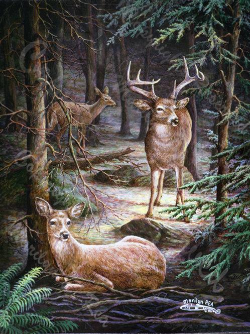 PRTGLP205-Deer in Deep Woods