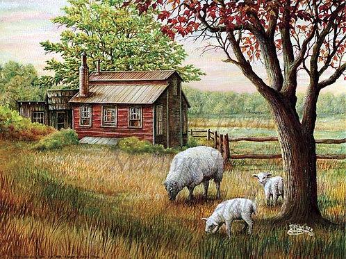 PRTGLP365-Sheep at Ben's Place