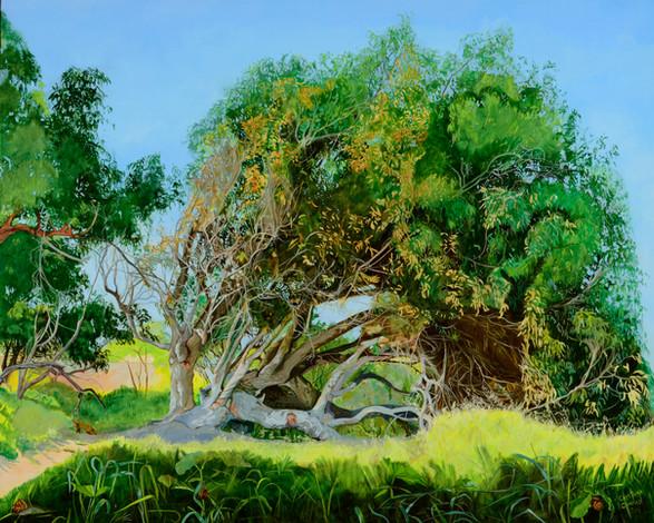 """""""Fallen Tree"""""""