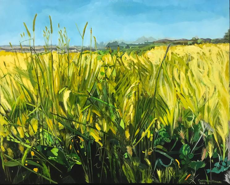 """Yellow Grasses"""