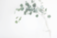 Image of a eucalyptus in a vase and a logo for Dine & Digs, a food and home blog