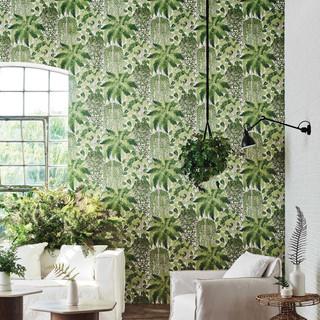 C_S_Botanical__Botanica__Fern__Dryopteri