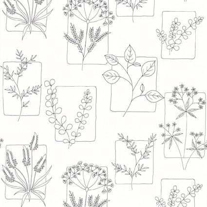 Herbes - Line.jpg