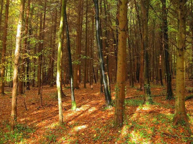 Slindon Woods 2