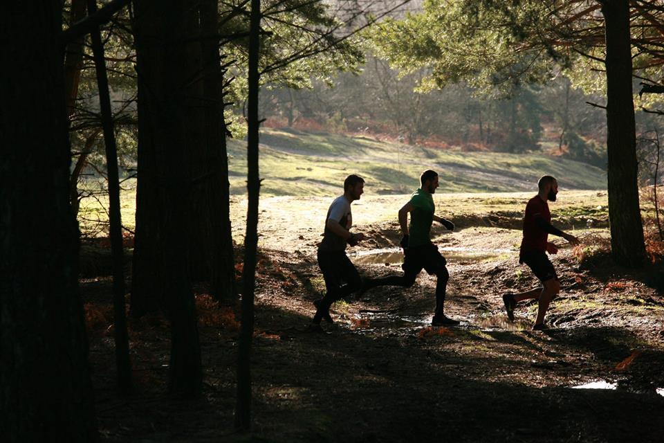 Slindon Woods 6