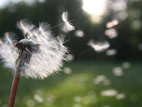 Faith is Not a Wish