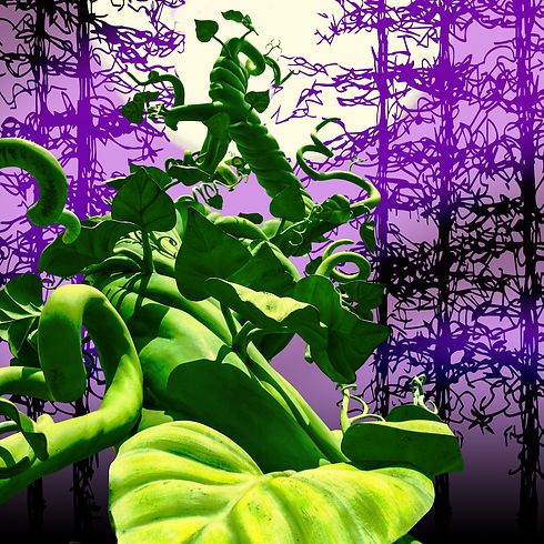 21–22_web-graphics_headers_into-the-woods.png