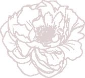 Blüte offen_altrosa.png