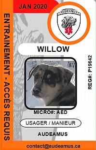 05WILLOW.png