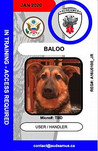 U01-BALOO.e web.png
