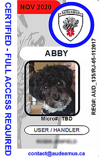 abby1.png