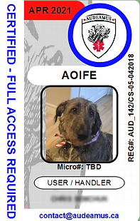05AOIFE_edited.png