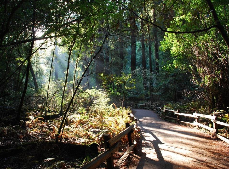 path through redwood forest