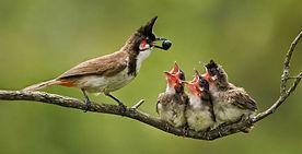mother bird feeding chicks.jpg