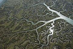 river networks.jpg