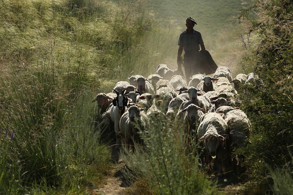 SHEPHERD AND GUARDIAN