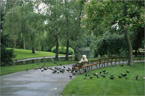 (A woman feeding the pigeons in a park here in Vienna, Austria)