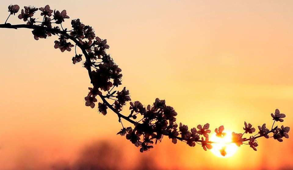FAITH SIMPLIFIES THINGS