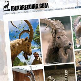 Ibex Breeding Website