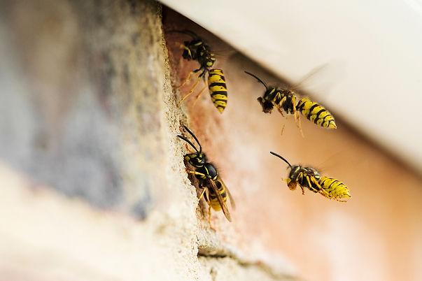 wasp page2.jpg