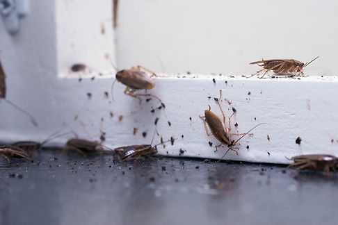 cockroach page.jpg