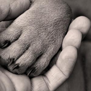 behandling af hunde.jpg