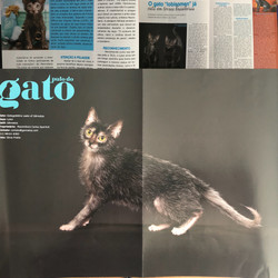 Revista Pulo do Gato - Agosto 2018