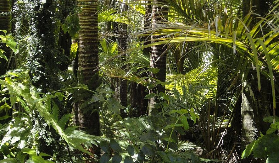 Rainforest_Connection_prevent_deforestat