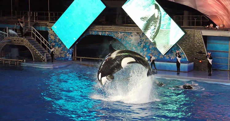 The fabulous Shamu show