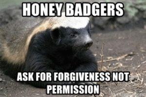 Honey badgers ask forgiveness, not permission