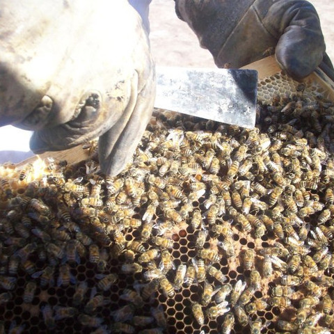 Bee Farm - Baja California, Mexico