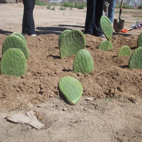 Cactus Farm in Baja California, Mexicali, Mexico