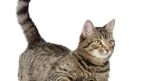 סיפור אמיתי על ילדה, חתול ויחסי אמון בין הורים וילדים