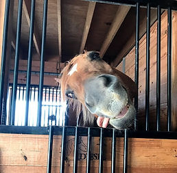 horse%20therapy%201_edited.jpg