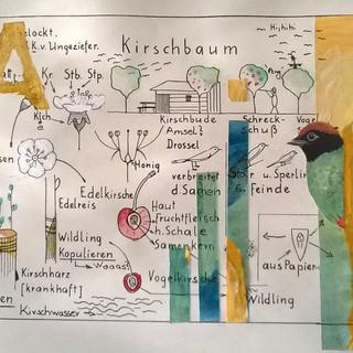 Kirschbaum Nr 17