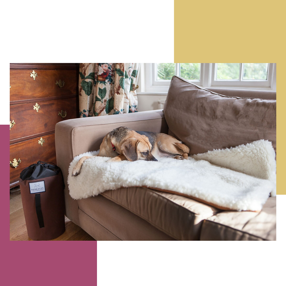 Berkeley Dog Bed: Travel Bed