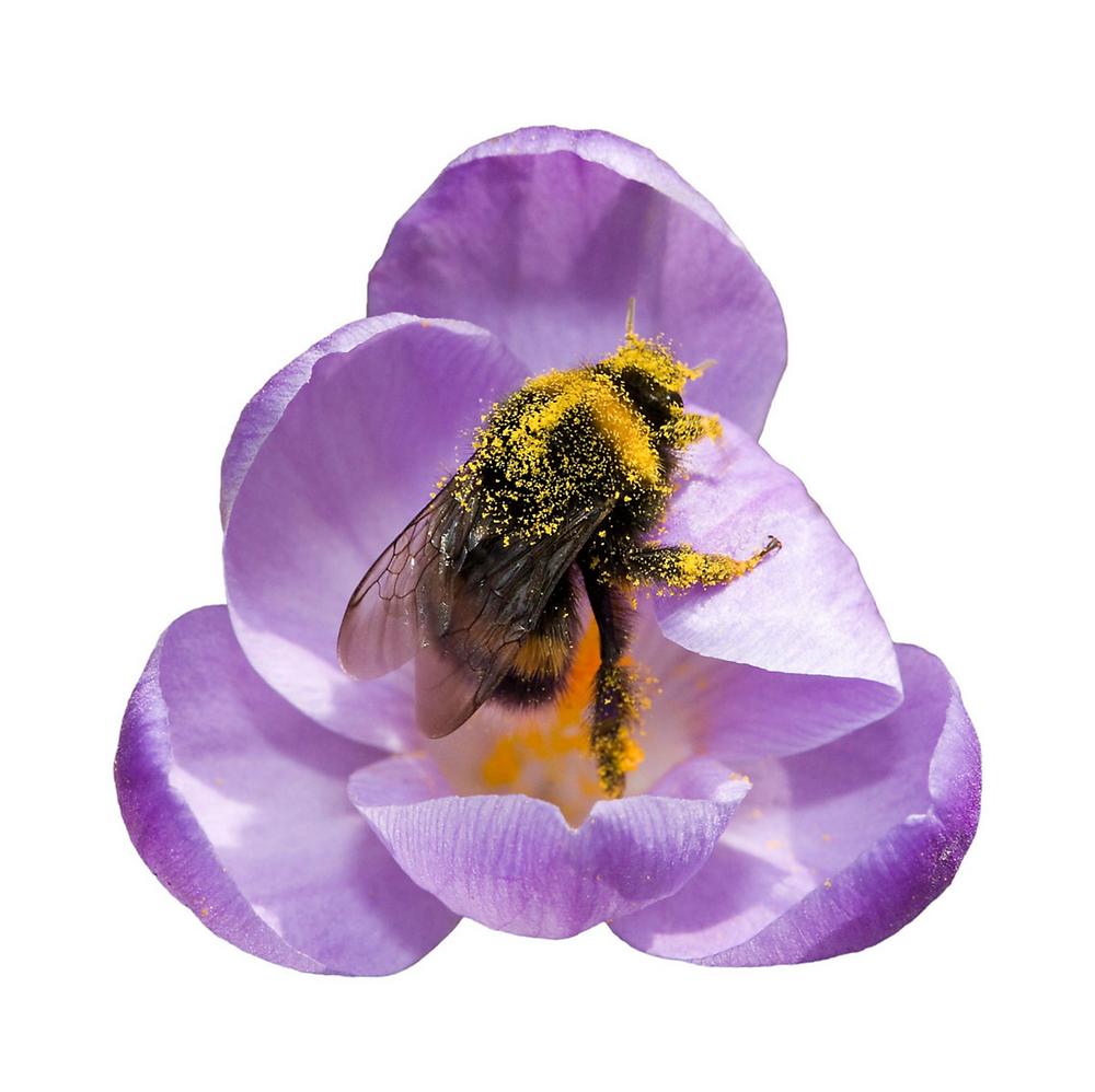 Heather Angel: Macro Shot of Bumblebee