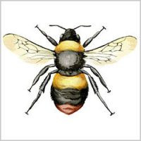 Early Bumblebee