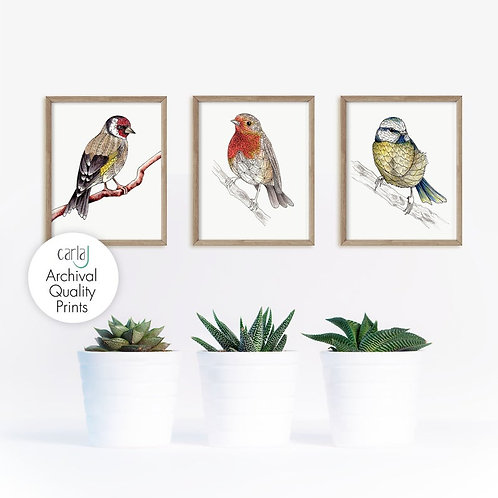 British Garden Birds Set of 3 Art Prints,