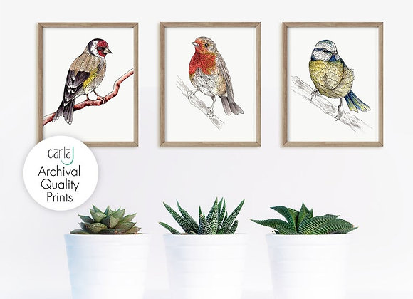 British Garden Birds Set of 3 Art Prints,