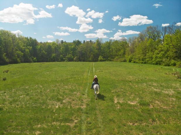 field (5).jpg